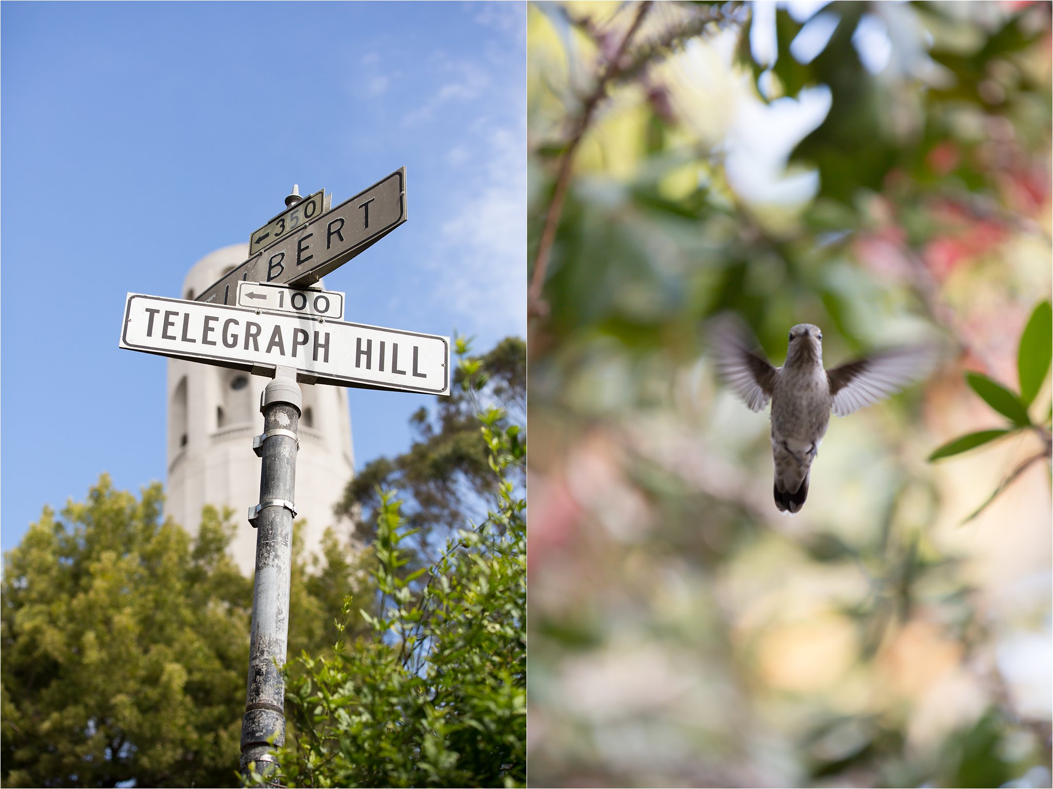 Telegraph Hill Sign and Hummingbird