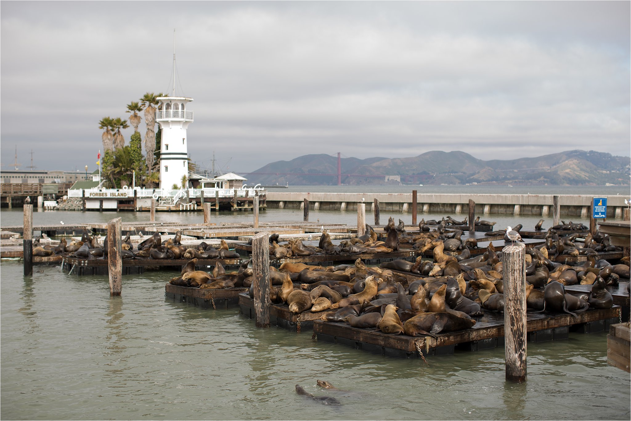 Pier 39 Lighthouse and Sea Lions