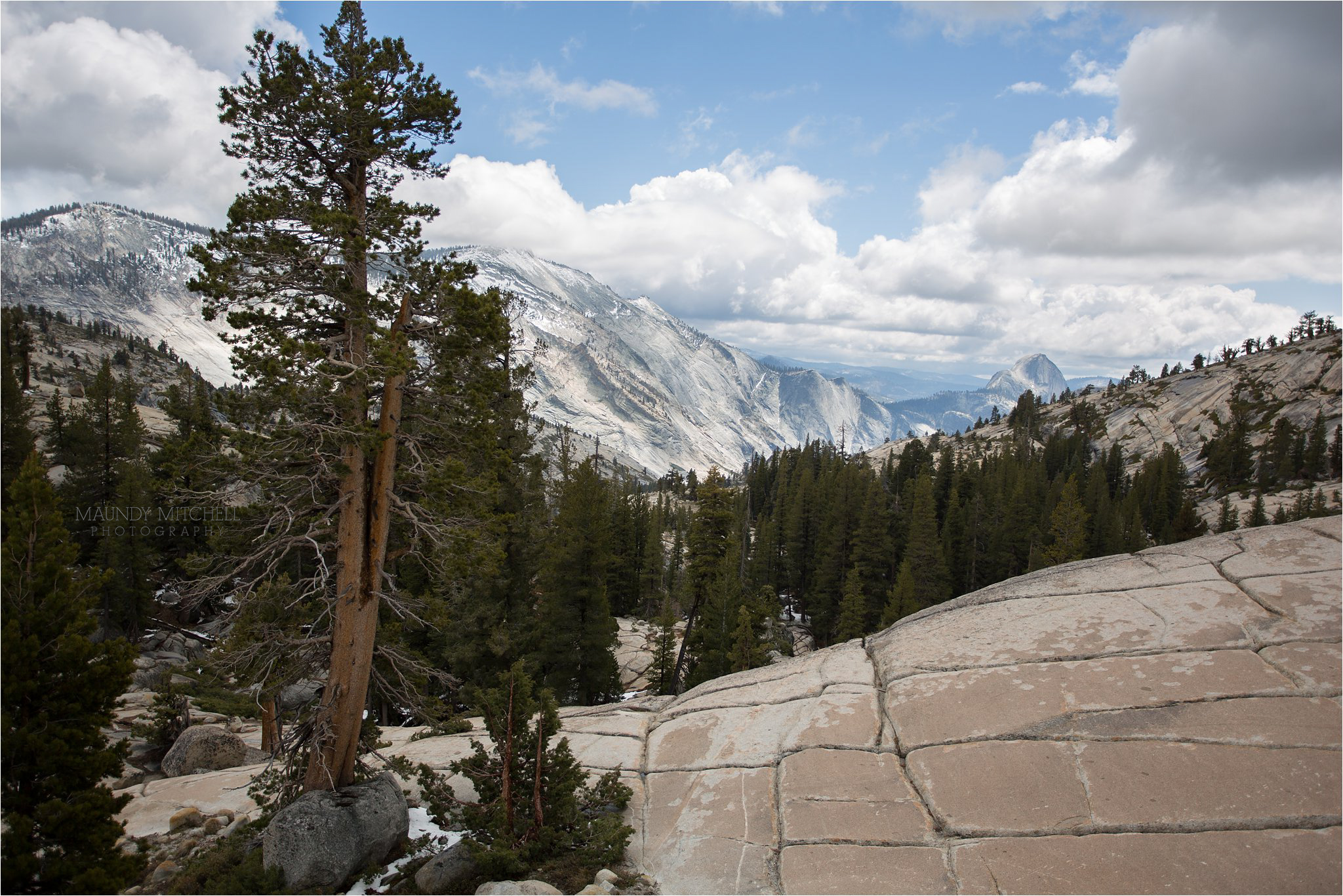 Tioga Pass View