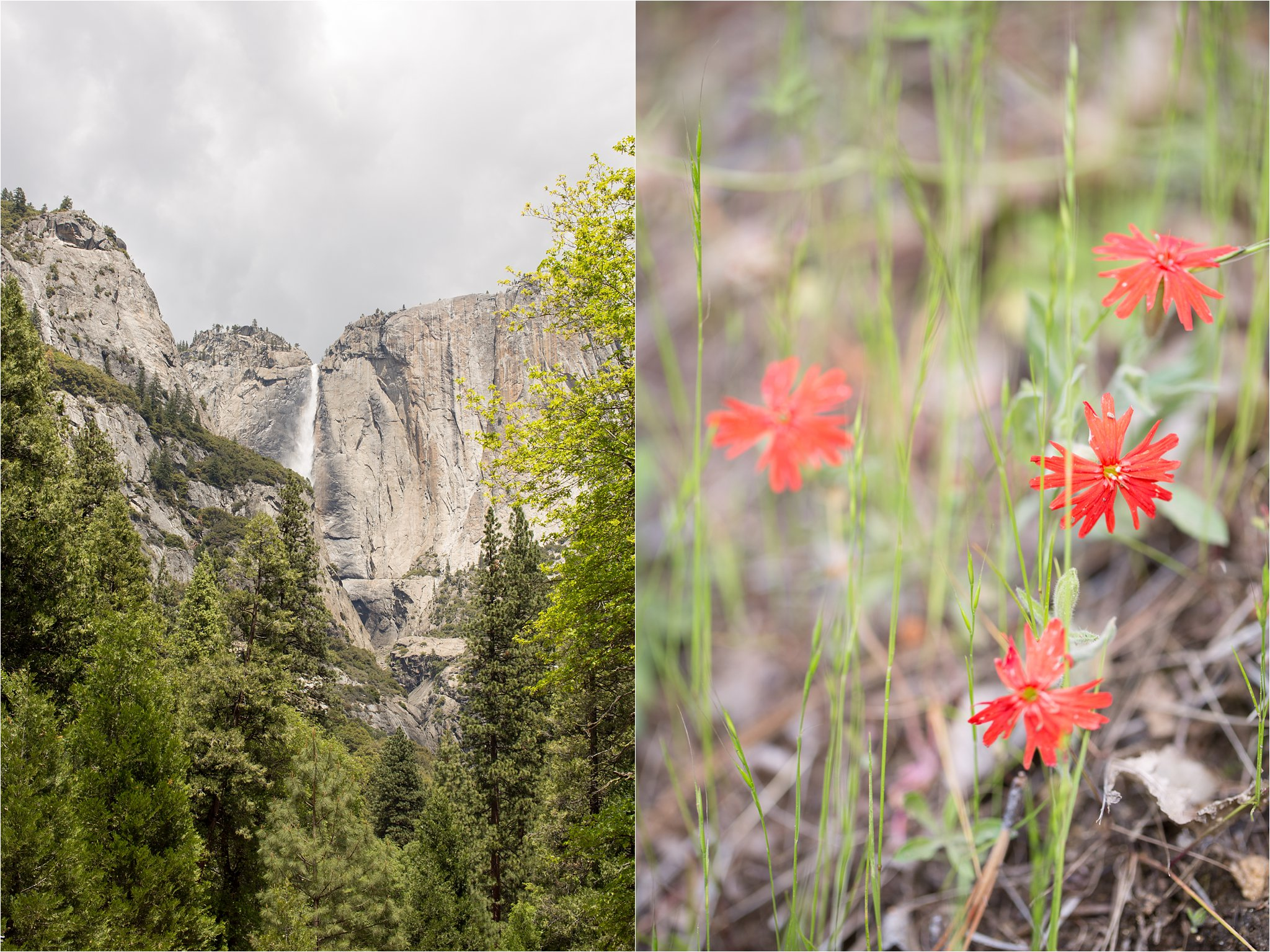 Yosemite Waterfall and Wildflowers