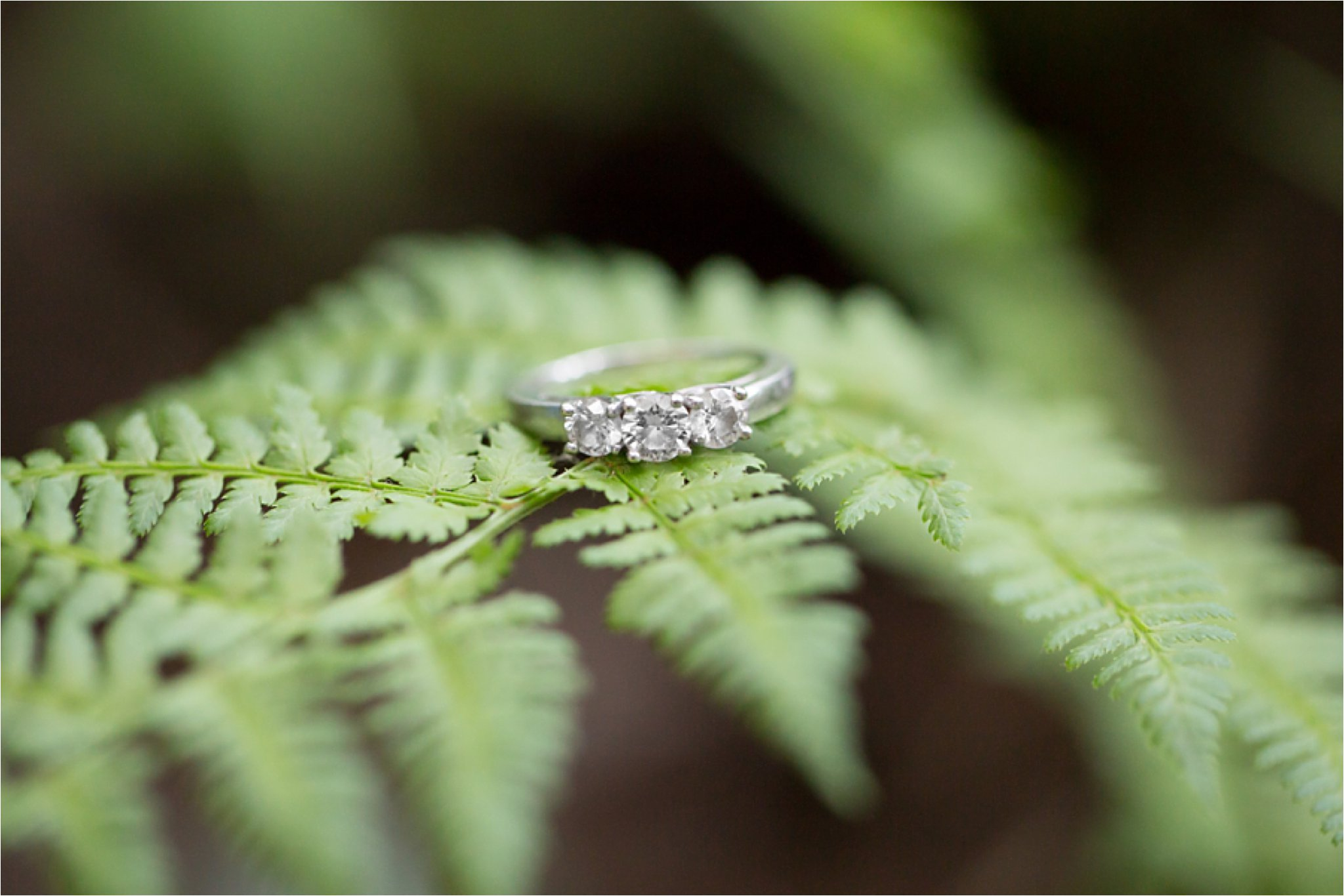 engagement ring on fern