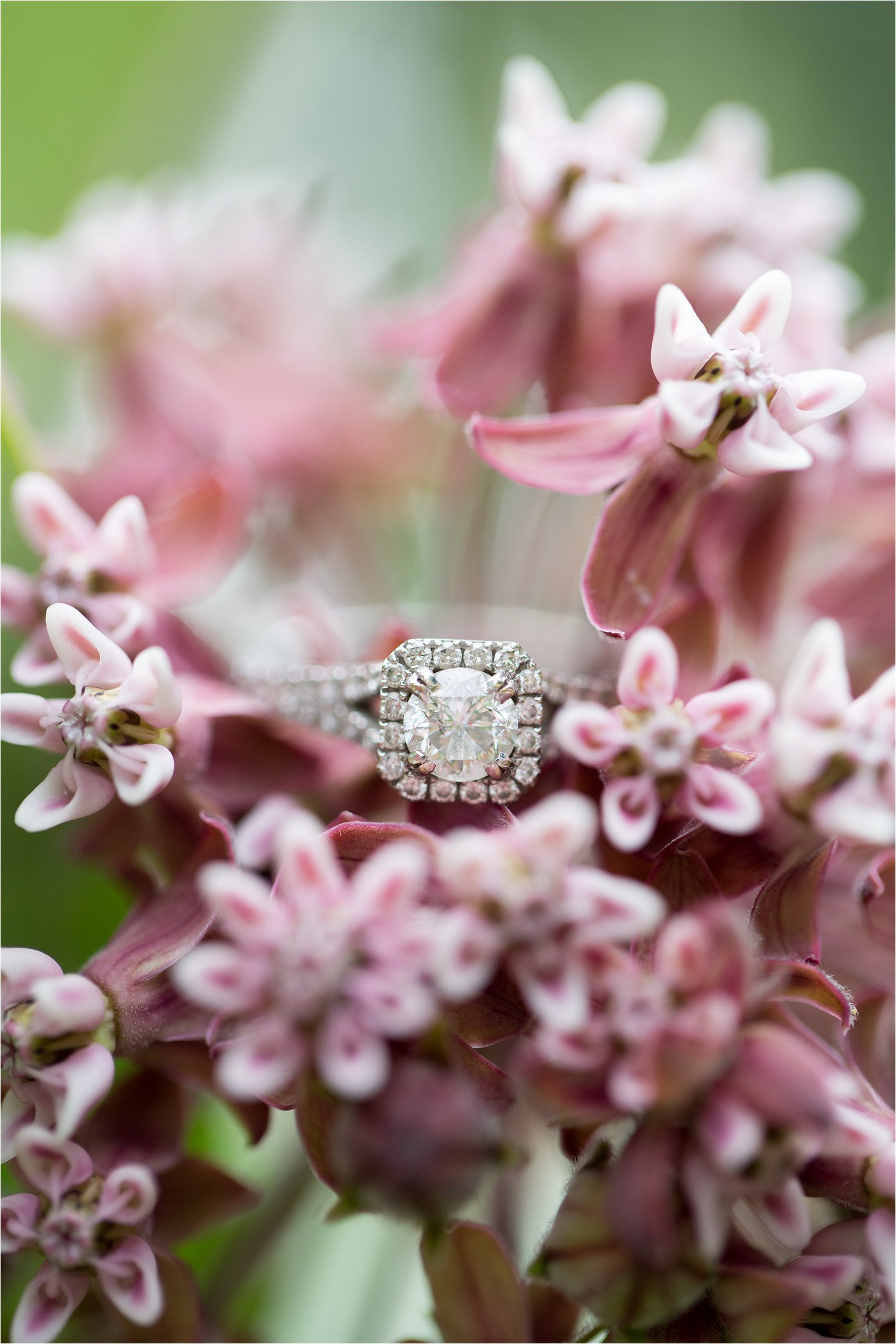 Engagement Ring on Flowers © 2015 Maundy Mitchell_0016.jpg
