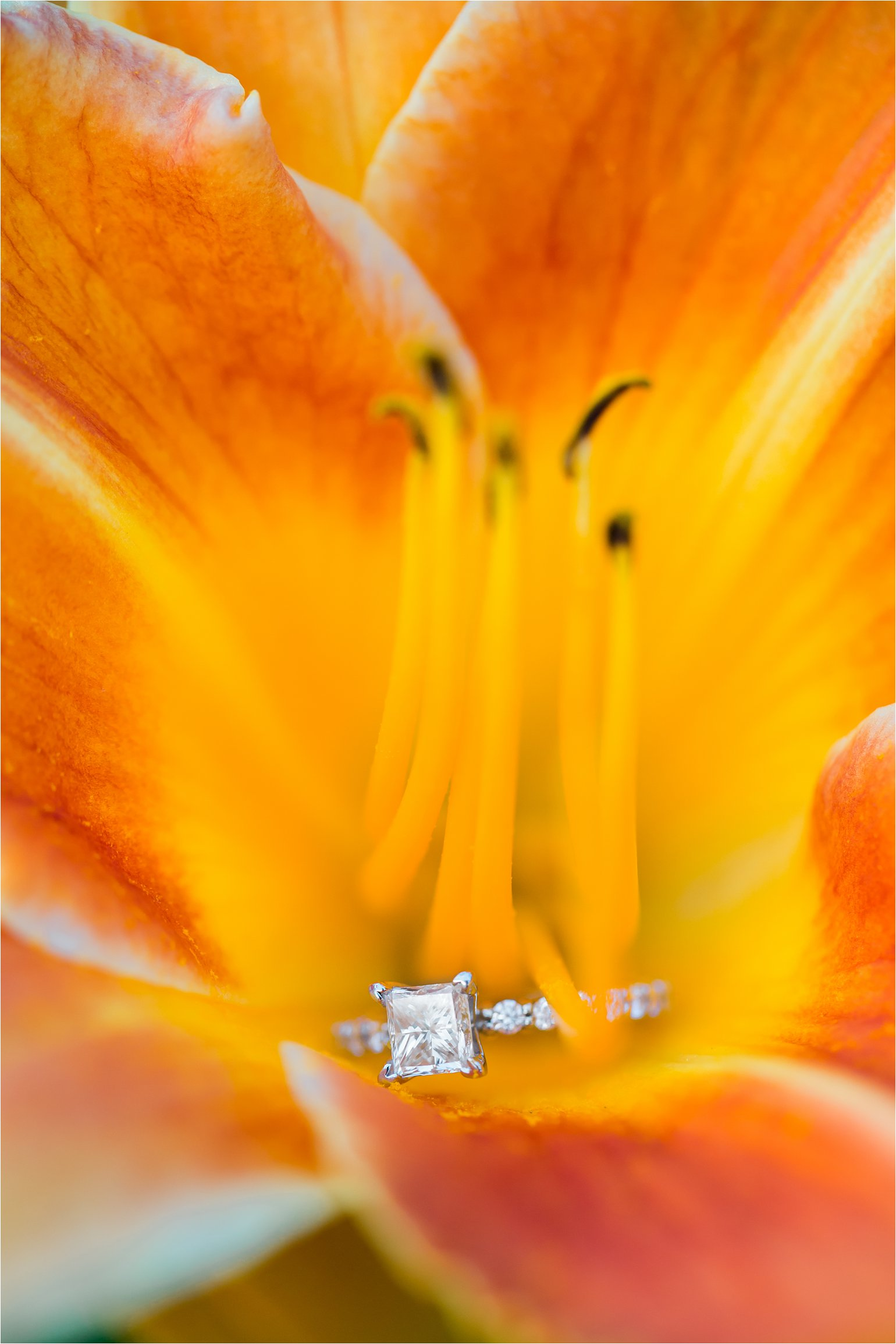Engagement Ring in Daylily © 2015 Maundy Mitchell