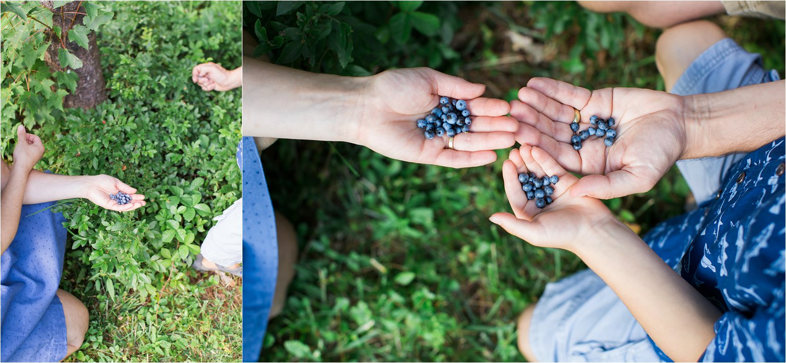 Family Picking Blueberries © 2015 Maundy Mitchell