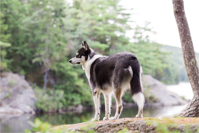 Alaskan Dog at Pond (C) Maundy Mitchell