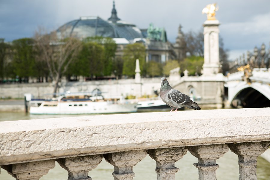 Bridge-Paris-Pigeon_0045.jpg