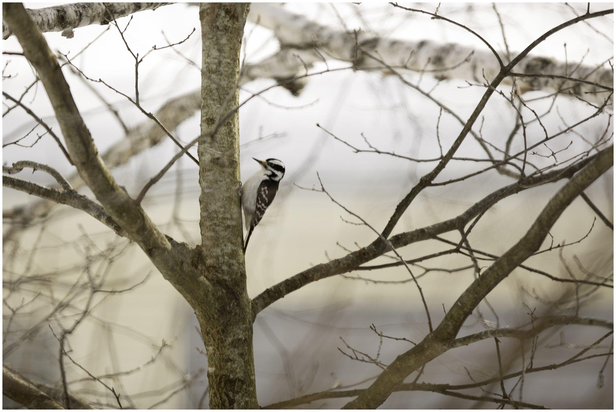woodpecker2.jpg