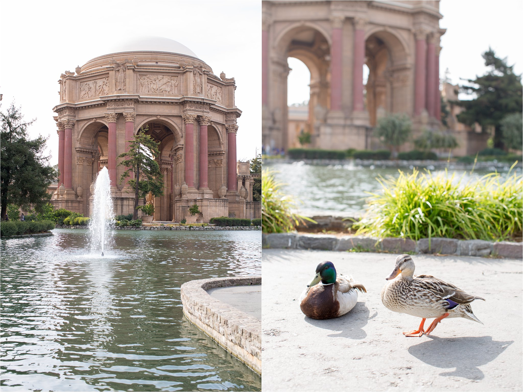 Palace of Fine Arts and Ducks