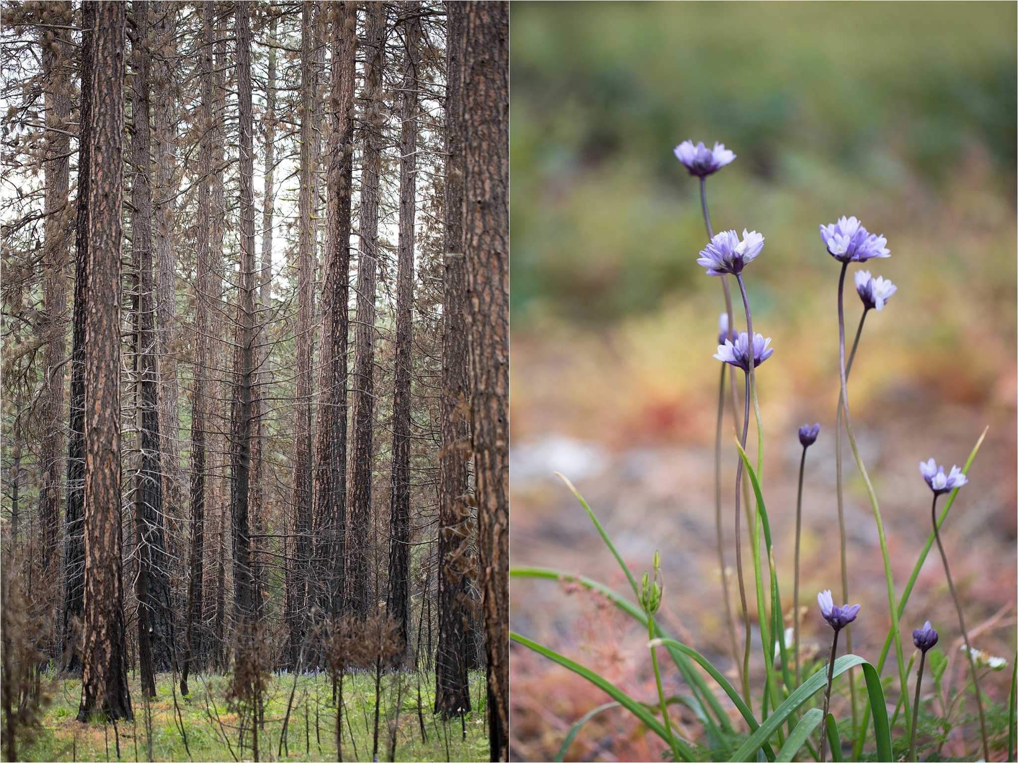 Charred Trees and Wildflowers