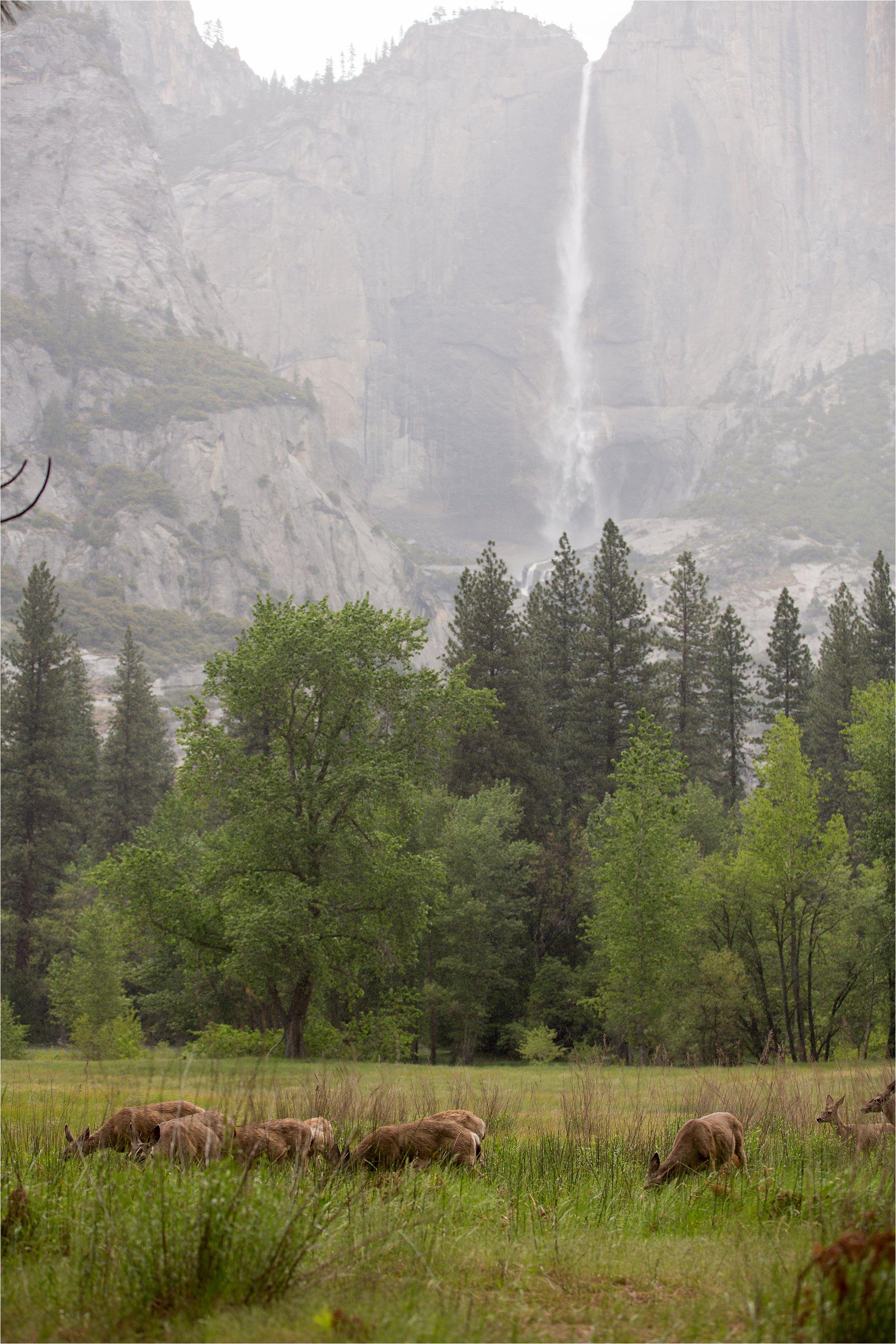 Waterfall and Deer in Yosemite National Park