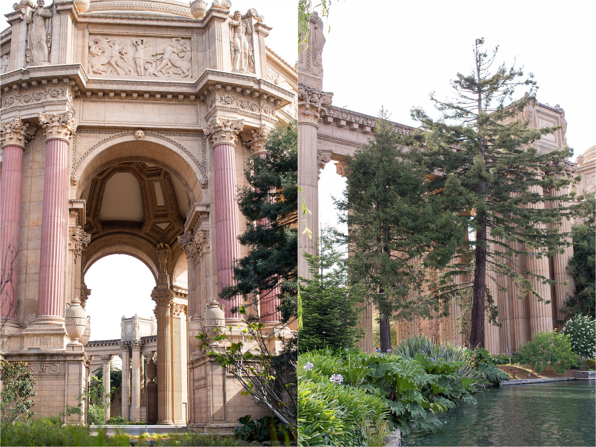 Palace of Fine Arts and Cedar Tree