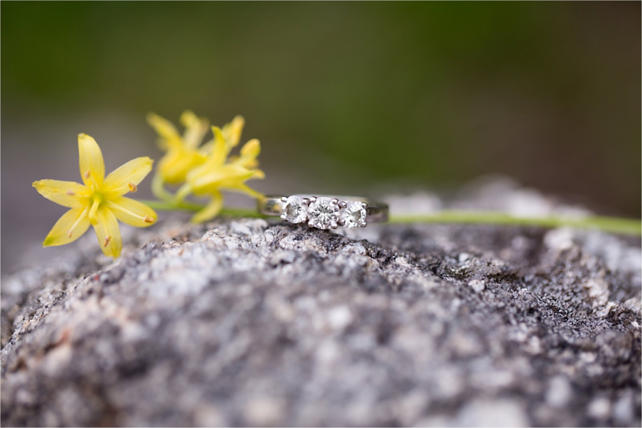 diamond ring on granite with trout lilies
