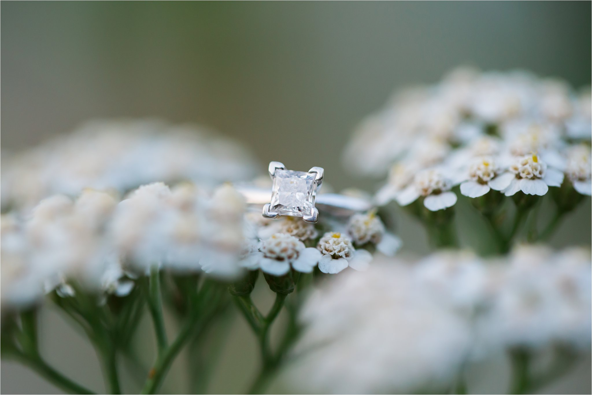 Engagement Ring on White Flowers (C) Maundy Mitchell