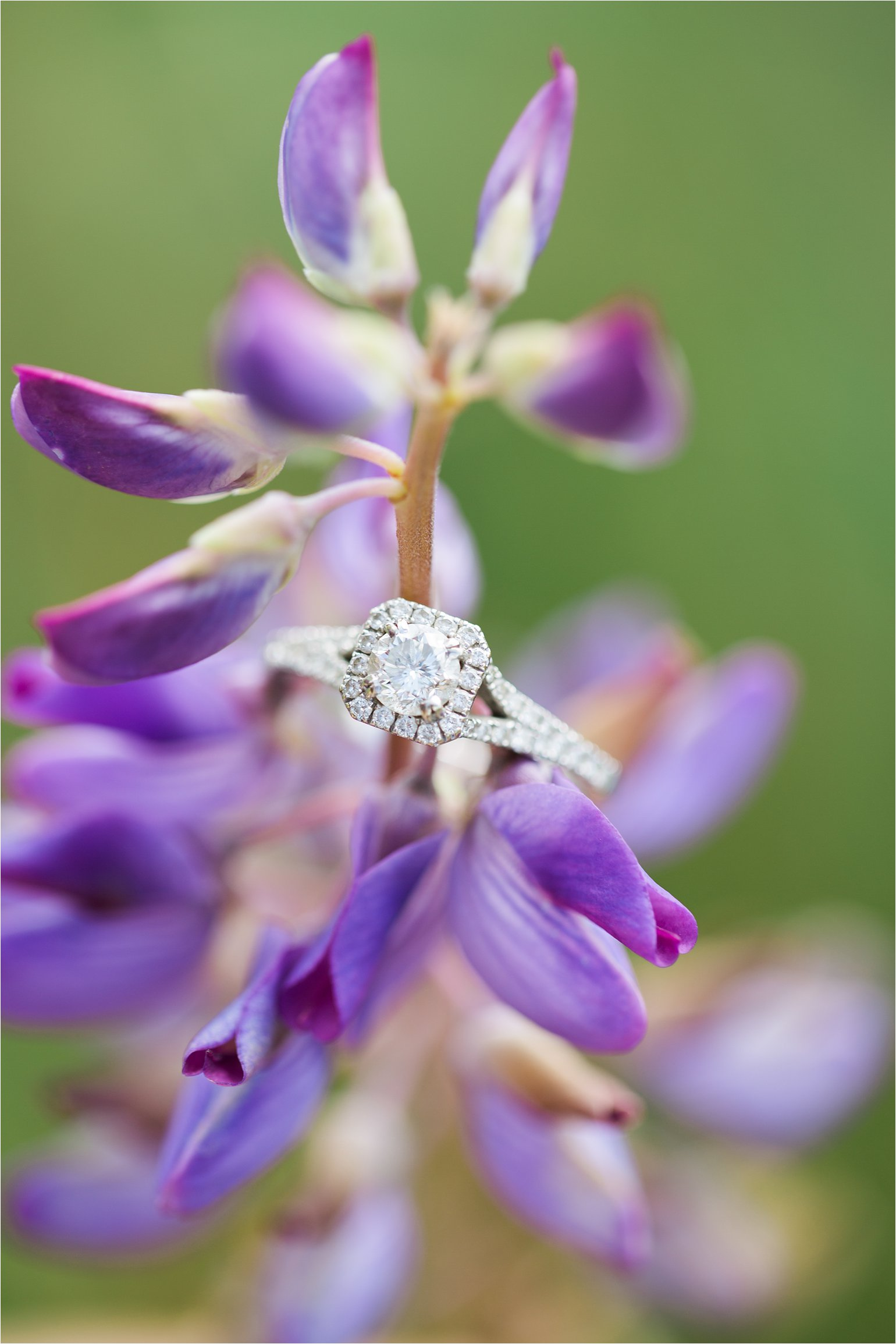 Engagement Ring on Flowers © 2015 Maundy Mitchell_0023.jpg