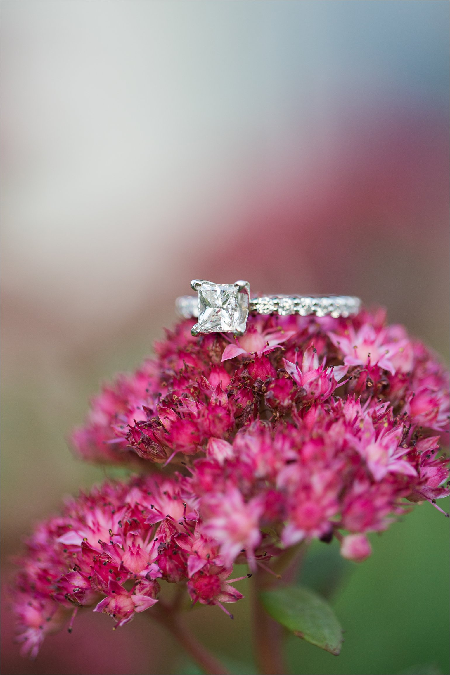 Engagement ring on flowers © 2015 Maundy Mitchell