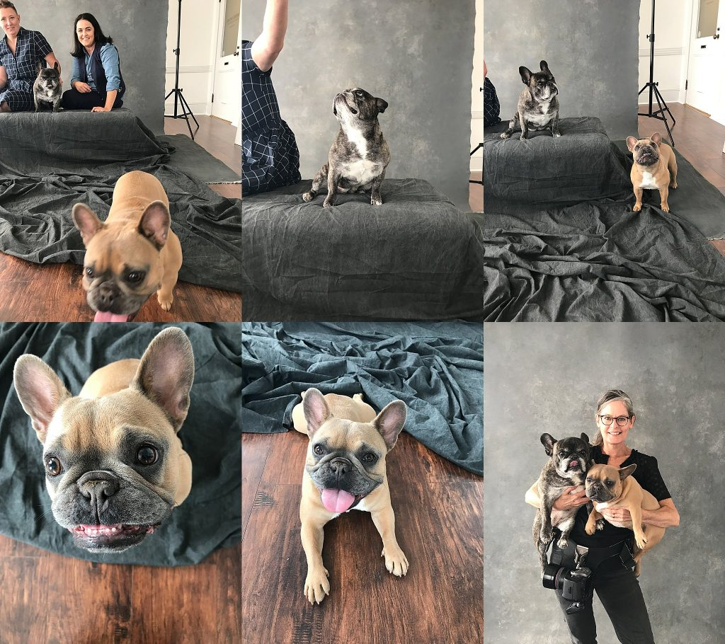 A collage of behind the scenes photos from Jini & Courney's photo session with their dogs